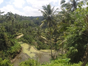 A view down towards Gunung Kawi