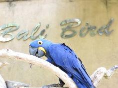Parrot @ Bali Bird Park