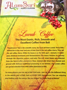 How to make Luwak Coffee