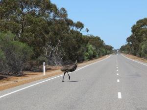 King Emu