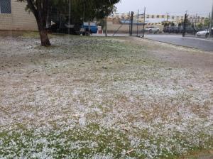 White lawn