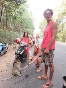 Monkey road